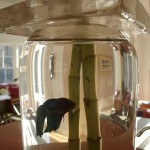 column fish bowl